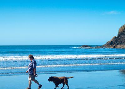 Dog walking at Abereiddi