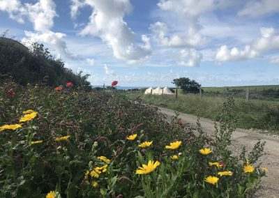 Wildflowers border the hedgerows at Llanungar
